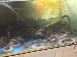 gukje-eel-dinner9