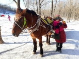 Horse sled driver
