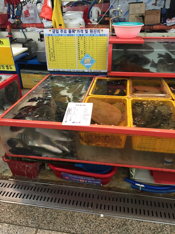 jagalchi-seafood-markets14