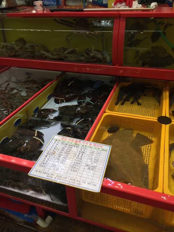 jagalchi-seafood-markets18