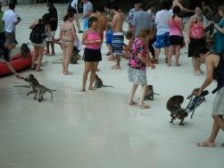monkey-beach3