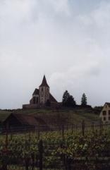 turckheim-ribeauville-vineyards02