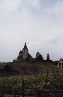 turckheim-ribeauville-vineyards02