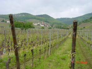 wine-drive-part22
