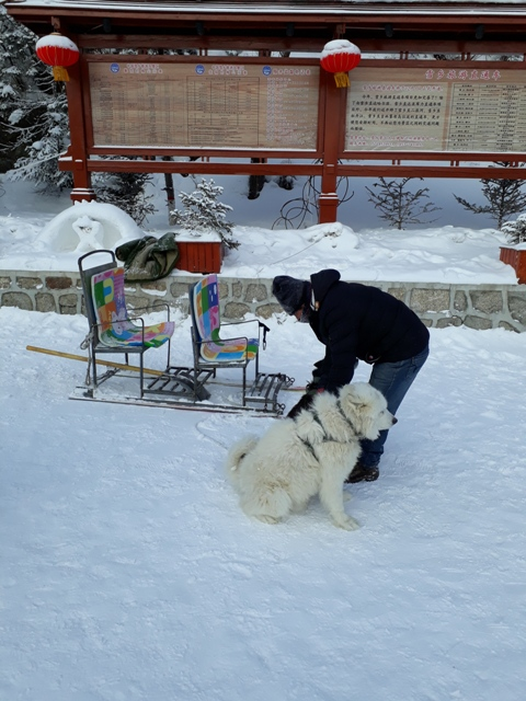 dog-sleds-snow-town1