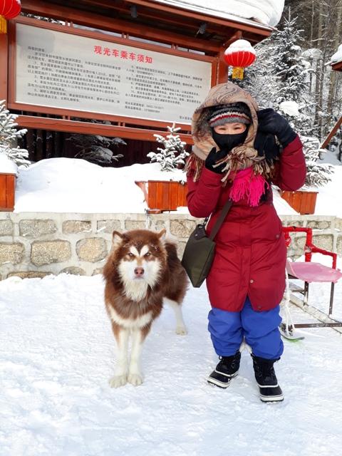 dog-sleds-snow-town11