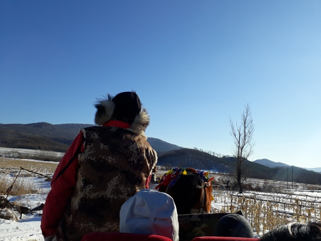 horse-sled-ride-1