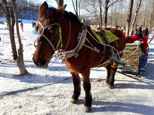 horse-sled-ride-4