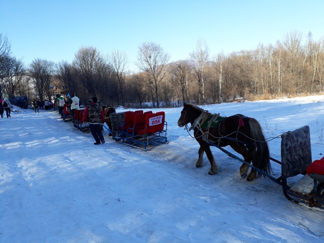 horse-sled-ride-6