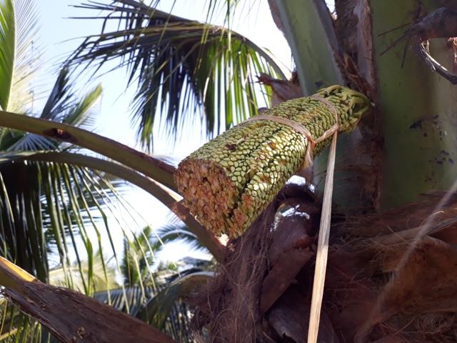 coconut-sugar-making10