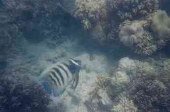 Arlington reefs17