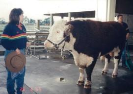 Rainbow Farm Cattle types2