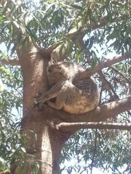 Rockhampton Zoo1