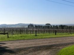 Scotman Hill Vineyward3