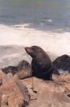 Seal5