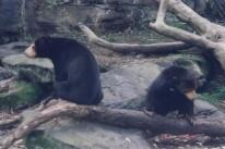 Taronga Zoo10