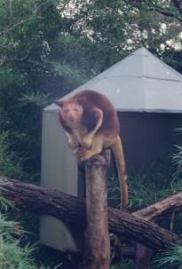 Taronga Zoo13