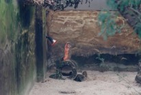 Taronga Zoo9