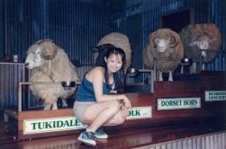 Woolshed - Sheep parade3