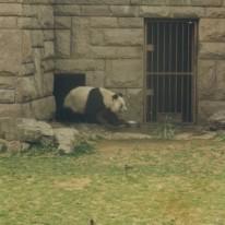 Beijing Zoo 11