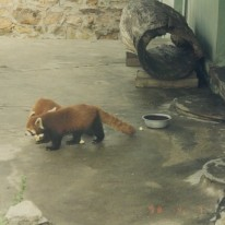 Beijing Zoo 2