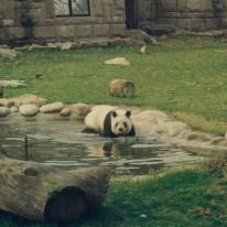 Beijing Zoo 7