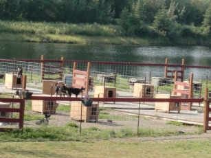 Chena Riverboat huskies6