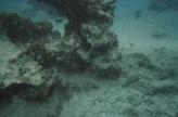 Cozumel coral2