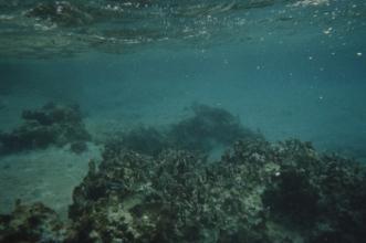 Cozumel coral3