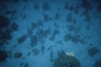Cozumel coral4