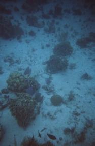Cozumel coral9