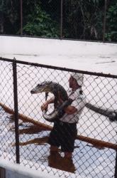 Everglades12