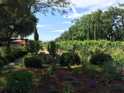 Grgich estate winery7