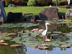 Japanese Garden - Heron 14