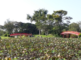 Japanese Garden - pond view15