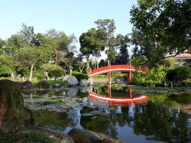 Japanese Garden - pond view22