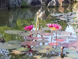 Japanese Garden - pond view7