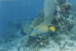 Snorkel Caymans2