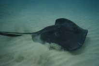 Stingray city06
