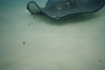 Stingray city11