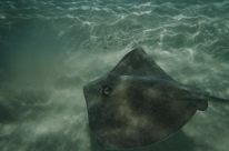 Stingray city12