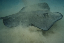 Stingray city14