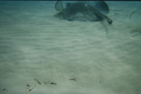Stingray city16