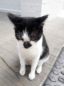 Cat in Yew Tee1