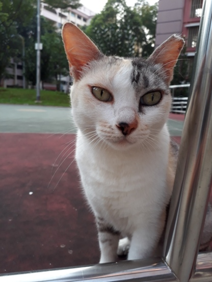 Patchy Cat2
