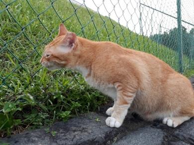 Sneezing Cat2