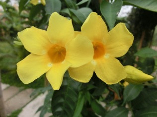 Resort Lotus Flowers7