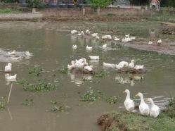 Trang An area 1