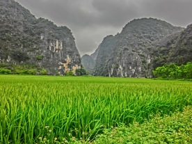 Walk in Trang An ricefields10