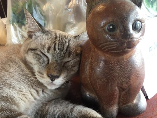 Krua Kannikar cat 2